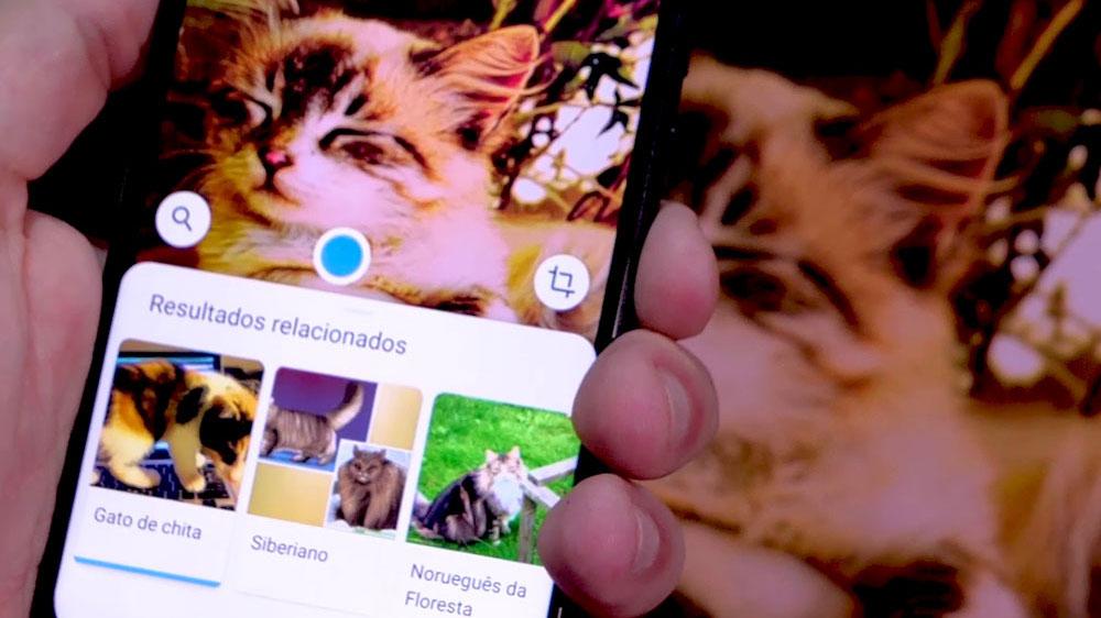 Google Lens reconhecendo um animal