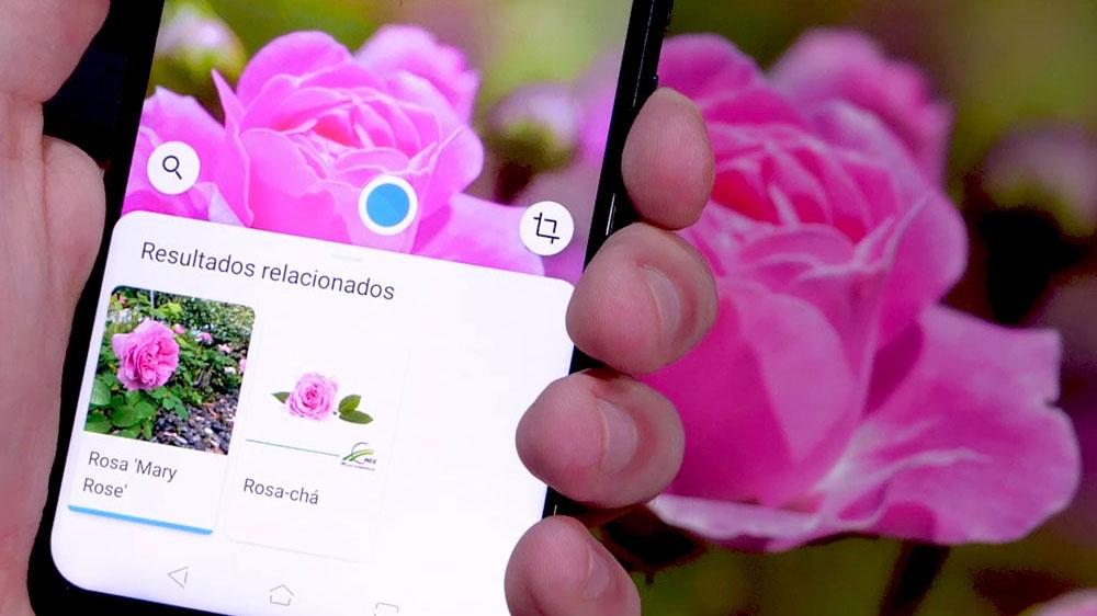 Google Lens reconhecendo uma planta